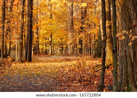 Autumn Nature Trail in the northeast state of New York. - stock photo
