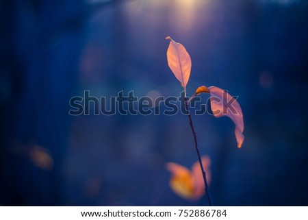 Autumn nature under sunlight and blurred background