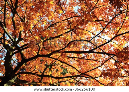 autumn oak tree leaves as nice natural background - stock photo