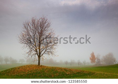 Autumn on the golf course in the mist at sunrise - stock photo