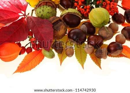 Autumn on the white background: chestnuts and acorns