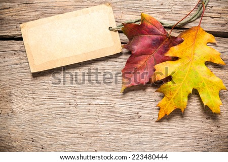 Autumn or fall sale tag with maple leaves - stock photo