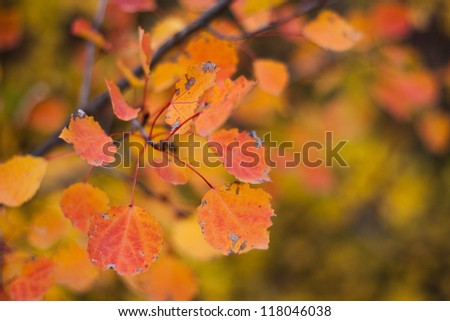 Autumn orange leaves in a forest, shot wide open - stock photo