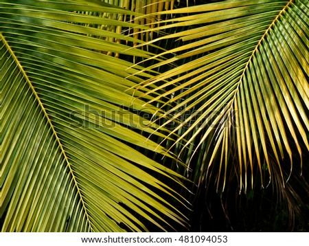 autumn palm leaf