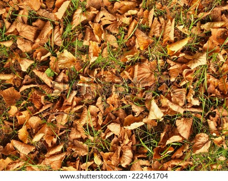Autumn park grass ground with colorful wild chestnut leaves
