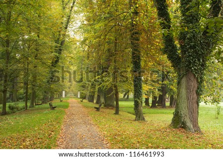Autumn park, path lined with benches, fallen leaves.
