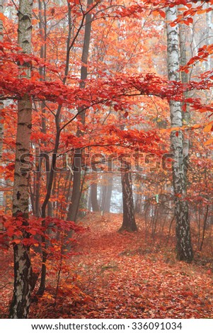 autumn park with color trees as nice natural background - stock photo