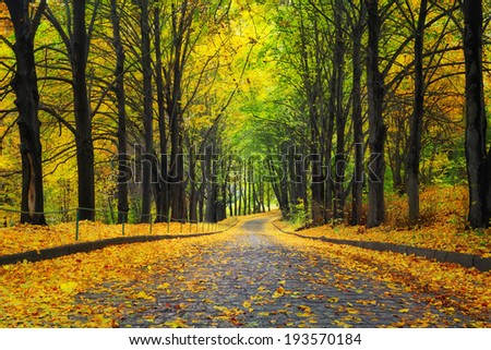 autumn park with yellow trees and leaves on walkway - stock photo