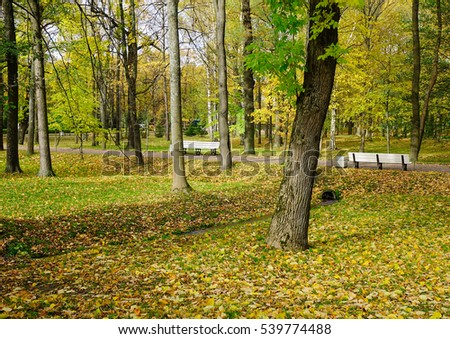 Autumn park with yellow trees at sunny day in Europe.