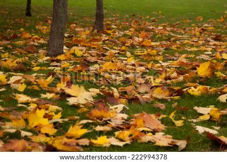 Autumn pattern of beautiful leaves. - stock photo