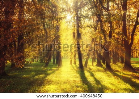 Autumn pictorial landscape - yellowed forest at the sunset. Soft focus and vintage warm tones processing - stock photo