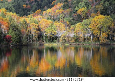 Autumn pond Scenery. Protected wetlands bathed in golden light and autumn foliage reflected on water at Kido Pond in Shiga Kogen, as beautiful as Tsuta marsh, Towada Hachimantai, Aomori, Japan - stock photo
