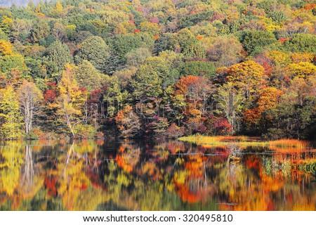 Autumn pond Scenery. Protected wetlands bathed in golden light and autumn foliage reflected on water at Mira lake in Shiga Kogen, as beautiful as Tsuta marsh, Towada Hachimantai, Aomori, Japan - stock photo