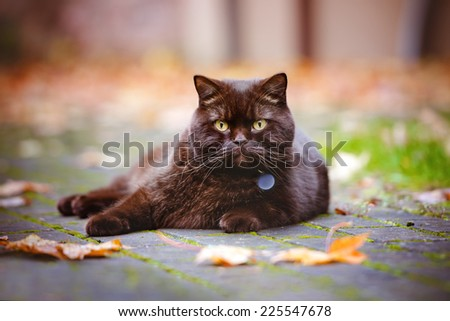 autumn portrait of a brown cat - stock photo