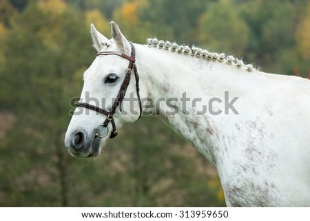 Autumn portrait of a nice white horse