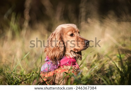 autumn portrait of happy dog sitting outside in the grass