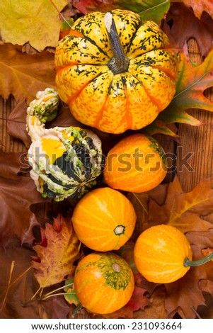 Autumn pumkins with colorfull leaves - stock photo