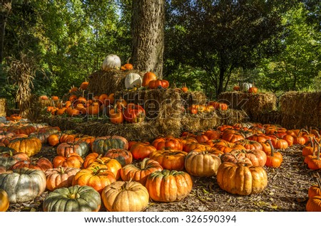 Autumn Pumpkin Display