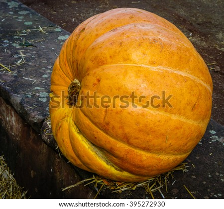 Autumn pumpkins on a concrete curb. Halloween - stock photo