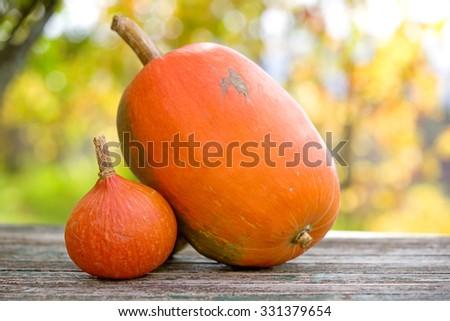 Autumn pumpkins on wooden table. Beautiful autumn Pumpkins thanksgiving background - stock photo