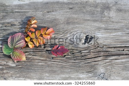 Autumn Raspberry and Wild Rose Leaves on the Old Board - stock photo
