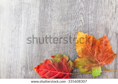 autumn realistic red leaf on grey wood background