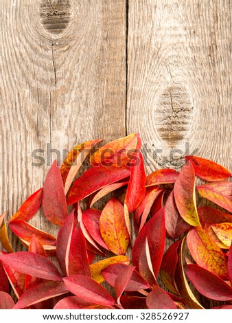Autumn red, orange leaves and on wood background with space for text