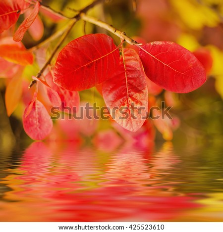 Autumn red tree branch with leaves, natural fall vivid background with water reflection - stock photo