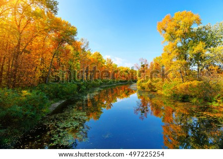 Autumn river and colorful trees near the water. Landscape in sunny day at fall season