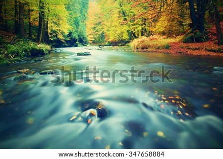 Autumn river bank with orange beech leaves. Fresh green leaves on branches above water make reflection. Rainy evening at stream.  - stock photo