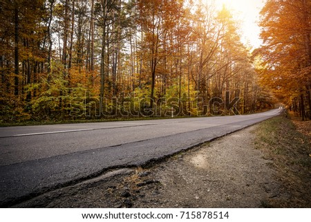 autumn road and golden leaves