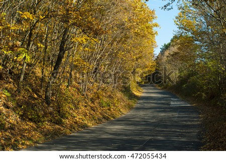 autumn road at forest