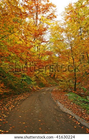 Autumn road - beautiful scenery.