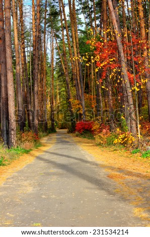 Autumn road in a sunny forest. - stock photo