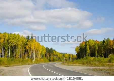 Autumn road in forest;