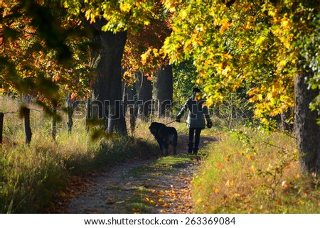 Autumn road with colorful trees and dog - stock photo