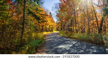 Autumn road with long shadows in colorful fall forest. Algonquin Provincial park, Ontario, Canada. - stock photo