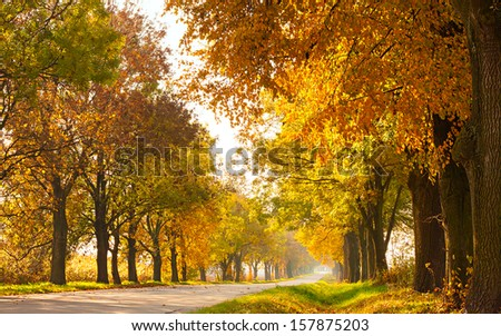Autumn rural landscape with country road and gold trees along - sunny beautiful day