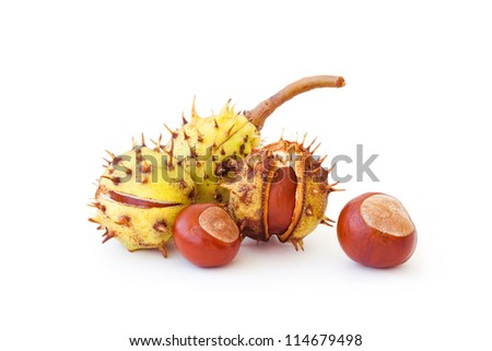 Autumn's chestnuts on white background - stock photo
