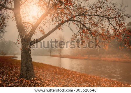 Autumn scene in sunset - stock photo