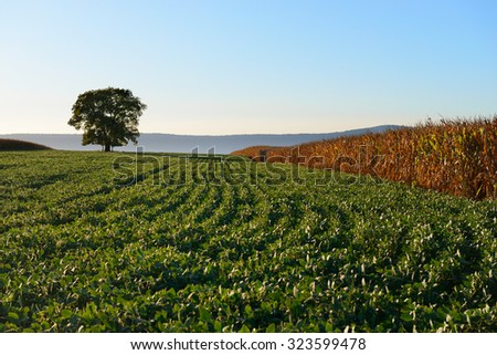 Autumn Scene of Tree in Farm Field at Sunset - stock photo