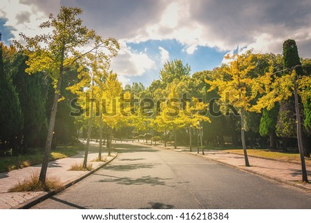 Autumn scene with road in forest with Sunny flare. Soft and Selective focus.