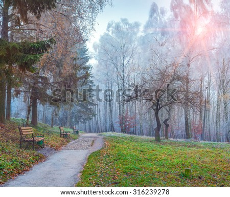 Autumn scenery in the City park. Trees with hoarfrost waving in the wind in the Ternopil, Ukraine, Europe. - stock photo