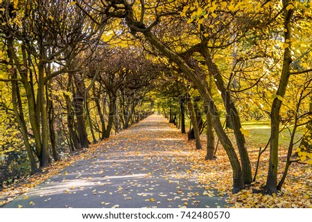 Autumn scenery in the Oliwski park. Park is favorite tourist destination in Gdansk. Poland