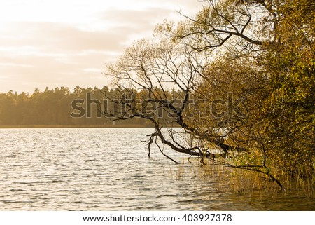 Autumn scenery in twilight. Leafless trees in the water of Swedish lake on autumn evening. Fall landscape with yellowed tree near water, reeds, lake and forest on other shore. Place for your own text