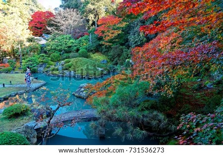 autumn scenery of a japanese garden of fiery maple trees in shoren in temple in