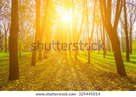 Autumn Scenery of Alley in Yellow and Dry  Leaves, Rays of the Sun Shining Through the Branches of Trees in Park - stock photo