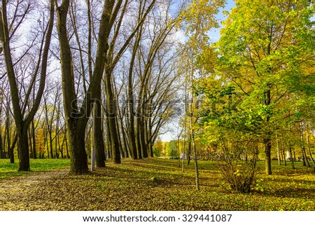 Autumn Scenery of Row Dark Bare Trees with Pathway and Colorful Trees on Land with Fallen Dry Foliage in Park