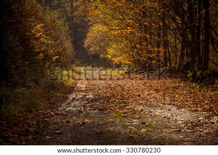 Autumn scenery with road in the forest covered by leafs - stock photo