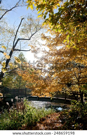 autumn scenic in forest and along brook and bridge crossing in olbrich botanical gardens of madison wisconsin - stock photo